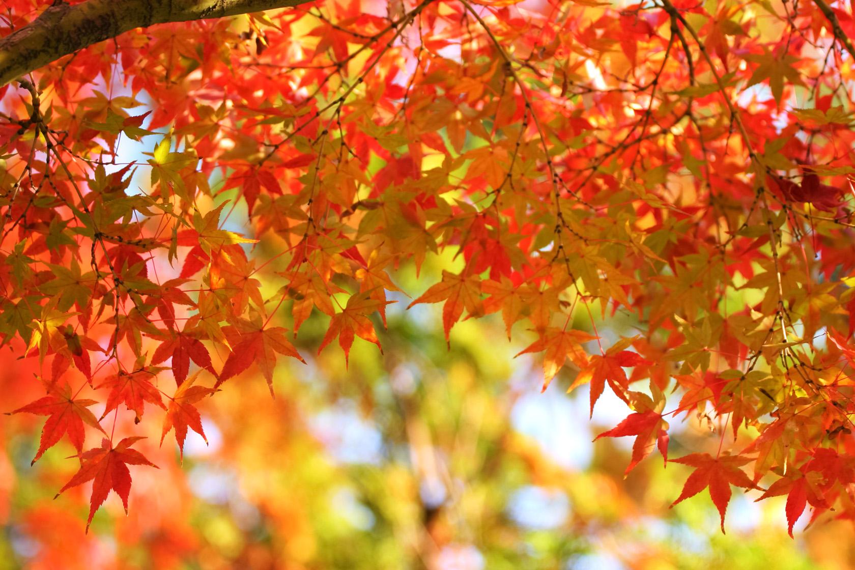 茨城県常陸太田市 西山荘の紅葉の見頃とアクセスは?